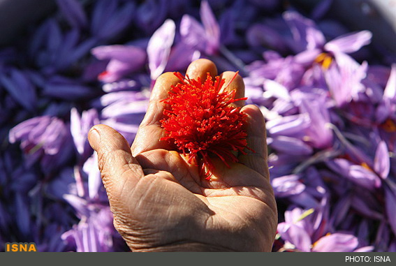 What is saffron,about saffron,saffron,price of saffron,saffron price,spice,buy saffron,bulk saffron,iranian saffron,pure saffron